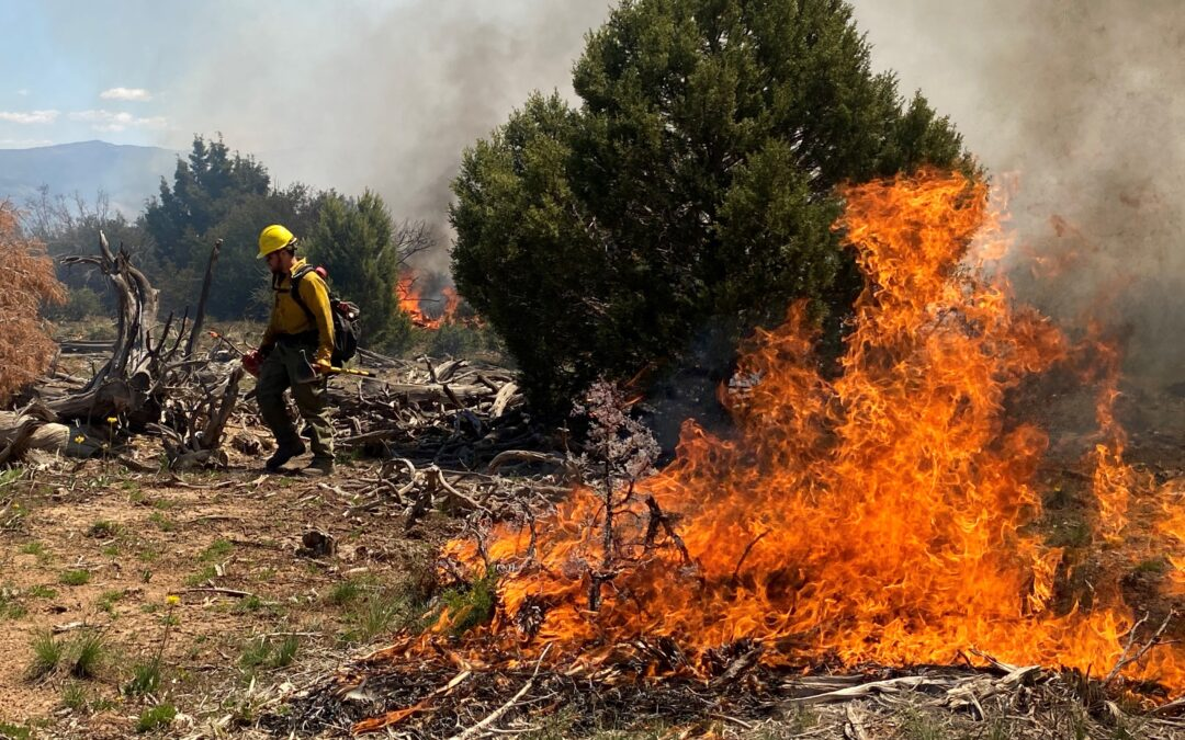 Prescribed Burn Treatments Planned for Tres Rios and Uncompahgre Field Offices